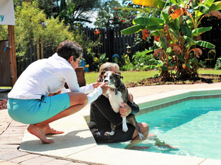 Improving Your Senior Dog's Quality of Life: The Benefits of Hydrotherapy