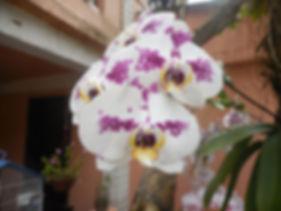 Orquidea na varanda