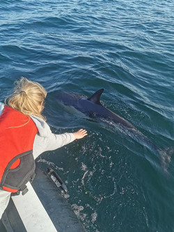 Seeing Dolphins from the Hydrus