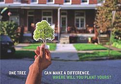 Tree Giveaway