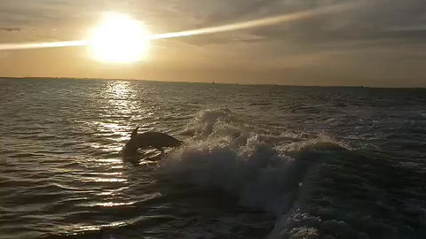 Watch dolphins on a sunset cruise near Fort Myers Beach, FL