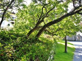 Gamle hager langs brygga...