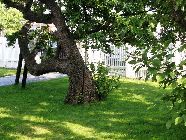 Gamle hager i Nevlunghavn