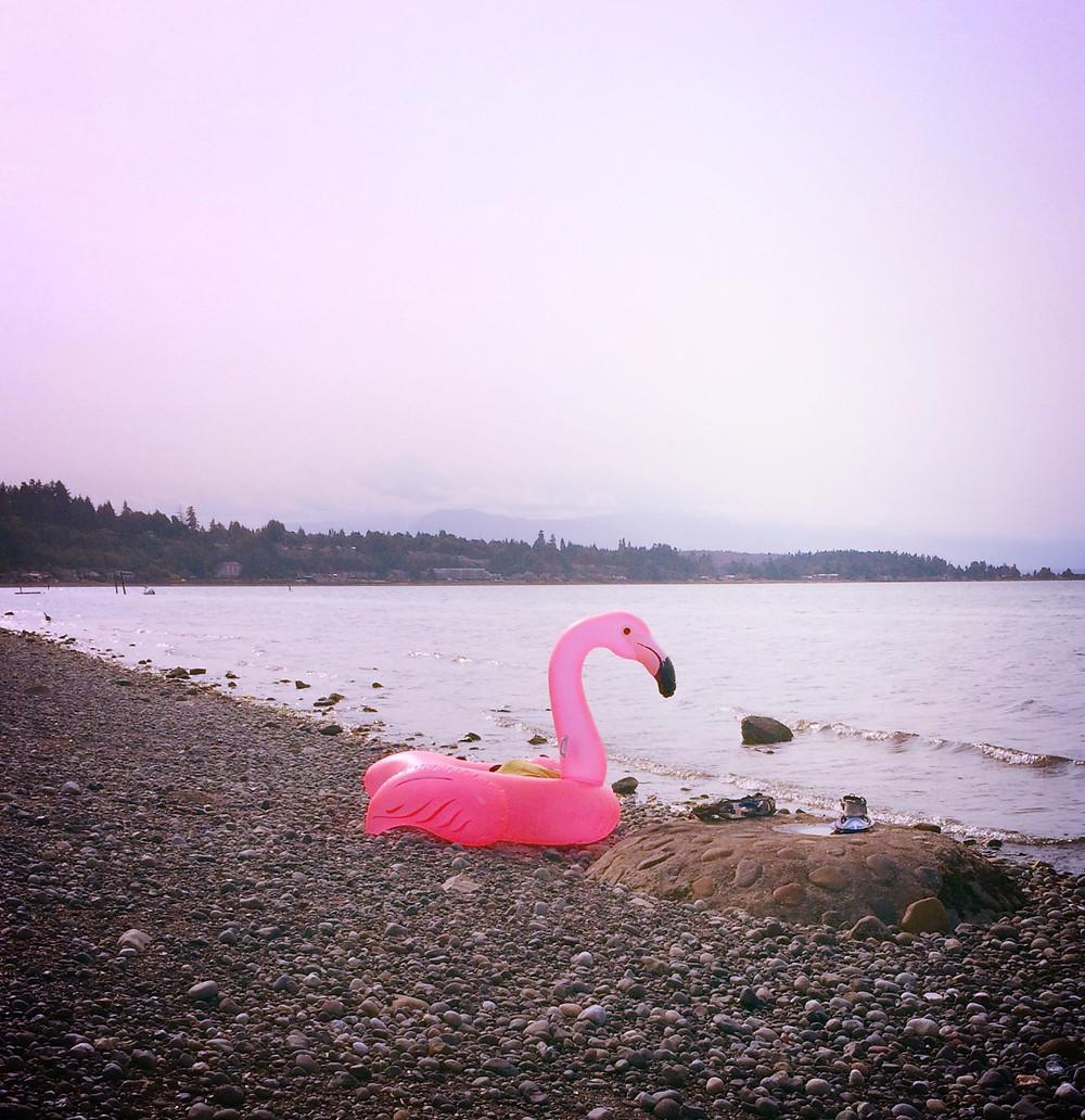 sea, flamingo, freedom, liberté, flamant rose, rêve, cheval