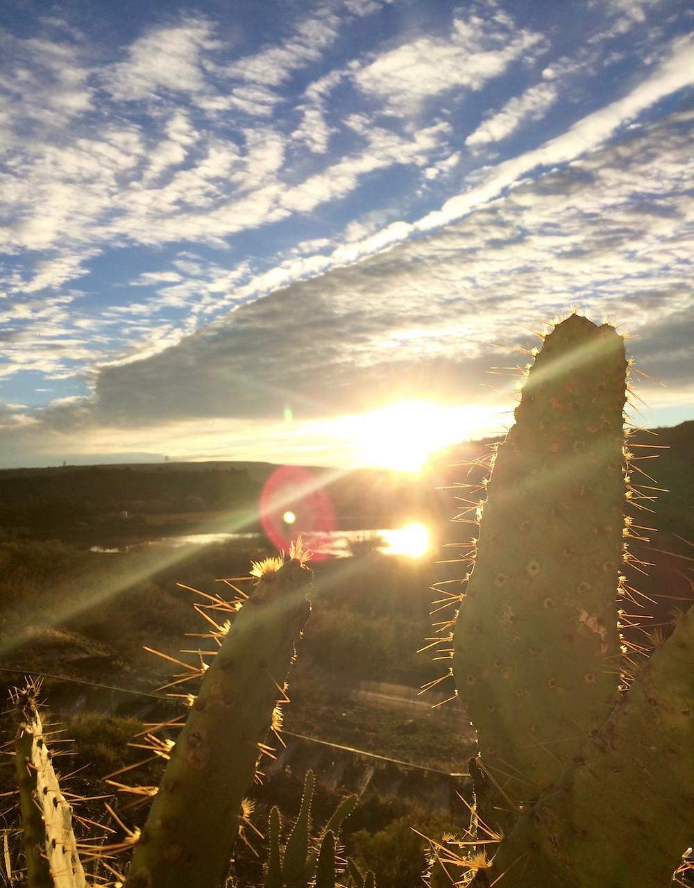 Programs cactus arizona united state aude lechrist freedom liberté lumière