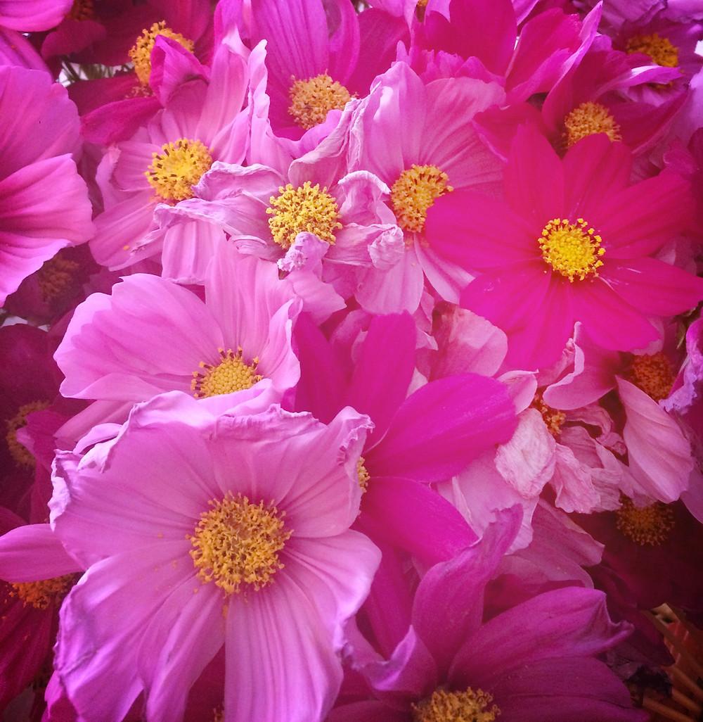 foi, au-delà, fleurs, joie, confiance, aude lechrist, intuition