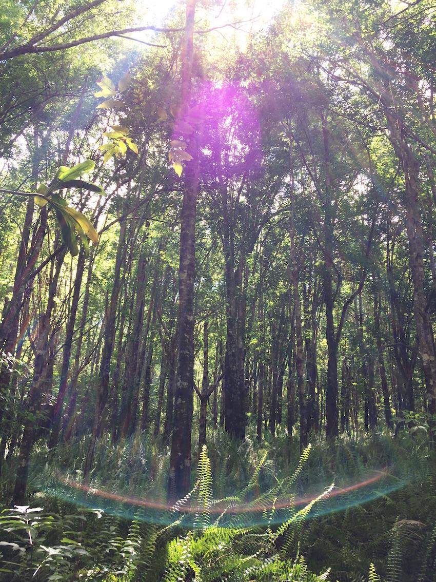 Miroit, Maui, Hawaï, arbres, trees, light, lumière, aude lechrist, exterieur interieur
