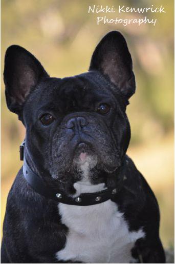 Pet Portrait Specialists