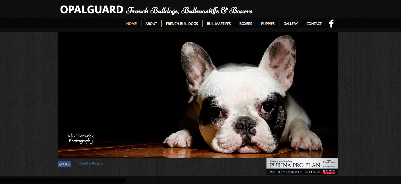 Opalguard French Bulldogs