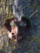 tree sprite lichen.JPG