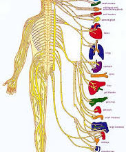 PINCHED NERVE?
