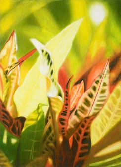 leafs VIII