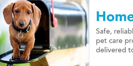 Buyer Beware!  Important tips when buying your pet's medication online.