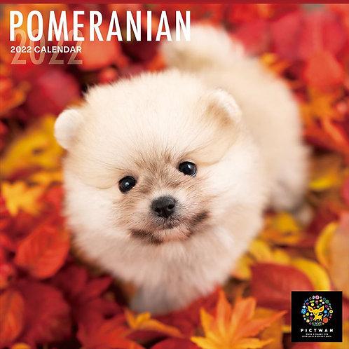 PICTWAN  2022年ポメラニアンカレンダー