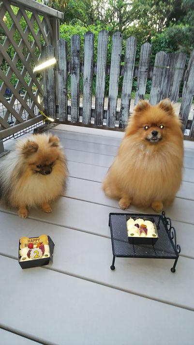 ハートブーケケネル ポメラニアン 子犬