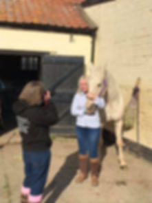 Laura V Photography | Equine Portrait Photographer | Horse Photgrapher Norfolk