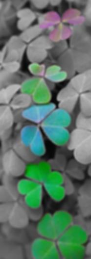 lucky clover.png