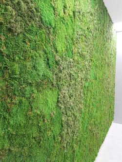 Musgo Moss + Plate