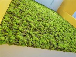 Musgo Moss