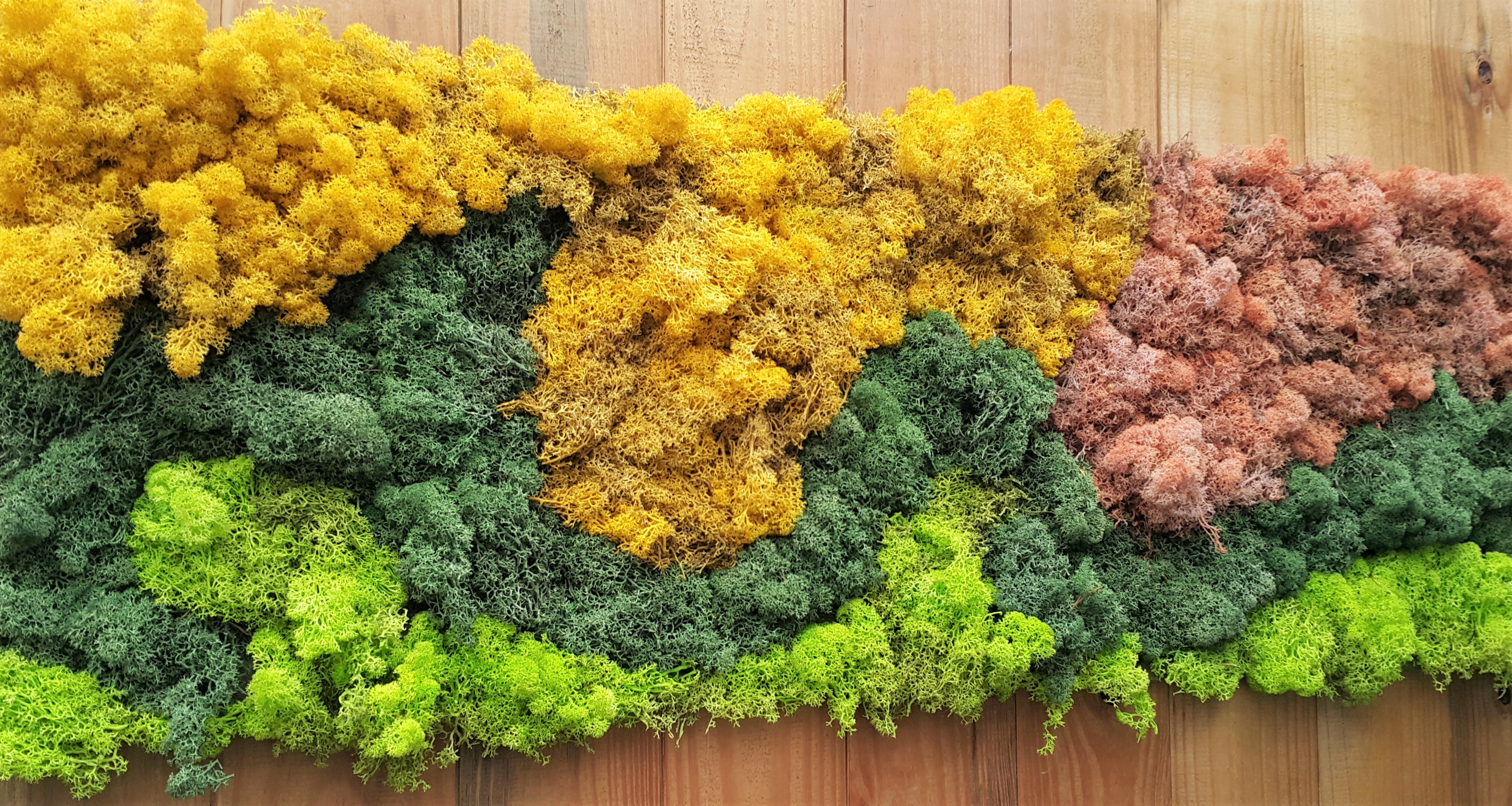 Parede Verde com Musgos