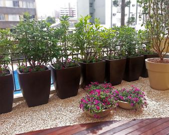 Plantas em varandas de apartamentos