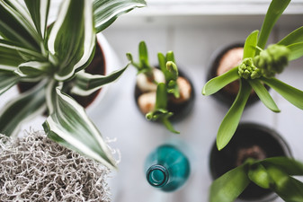 Espécies de plantas para varandas