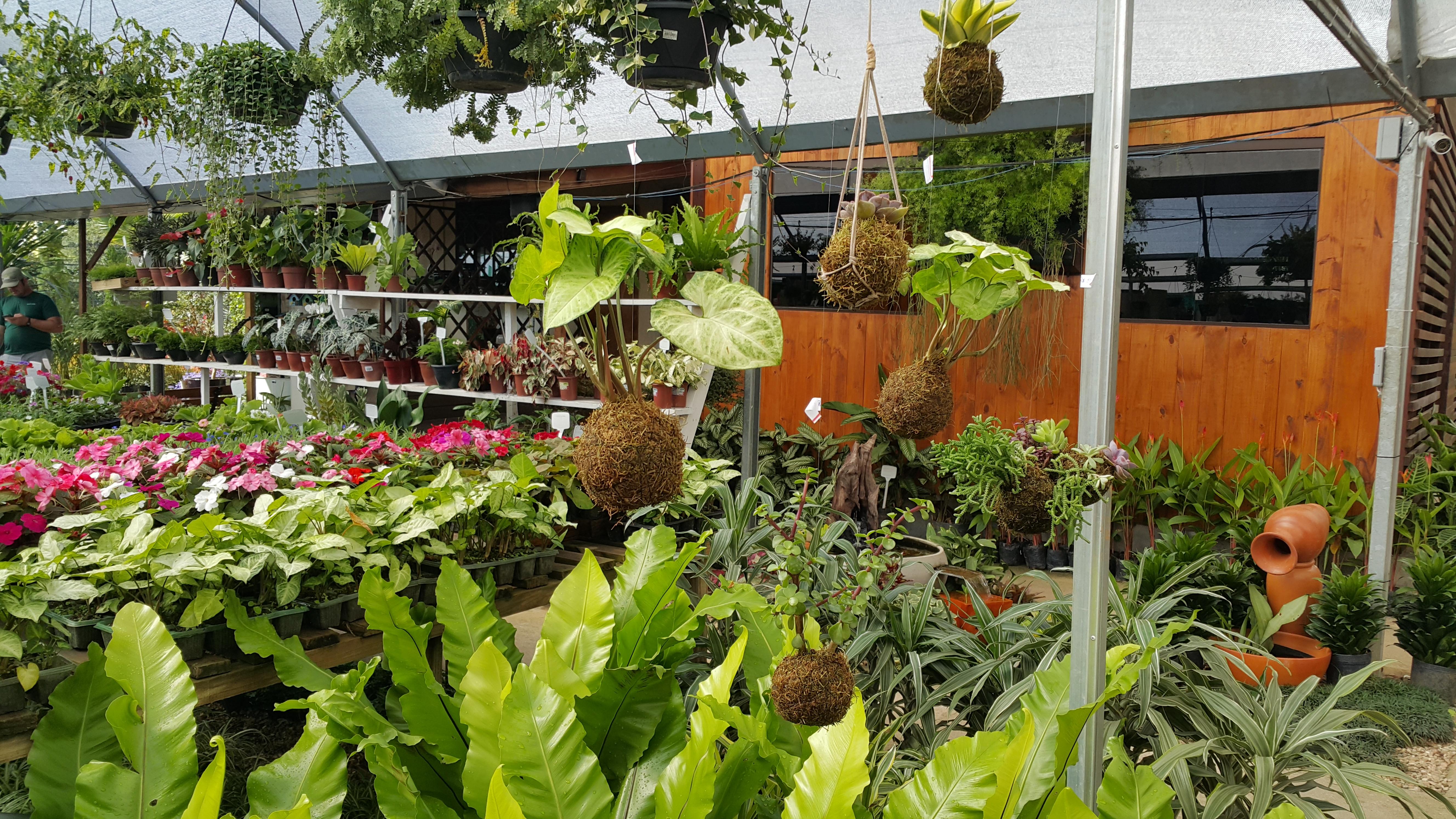 51dcf2301 Kokedama | Casa das Plantas - Garden Center e Projeto de Paisagismo |  Curitiba