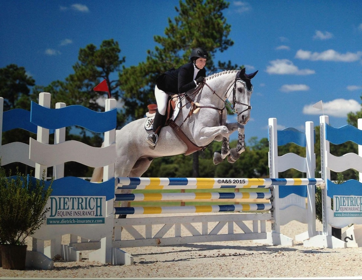 Hedge Amp Turf Farm Charlotte Horse Boarding Equestrian