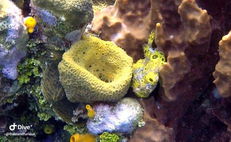 FrogFish.jpeg