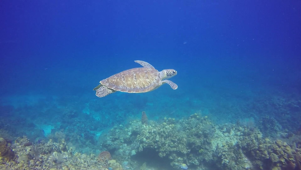 Turtle.mp4
