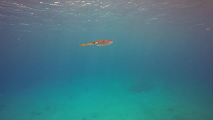 Squid.MOV