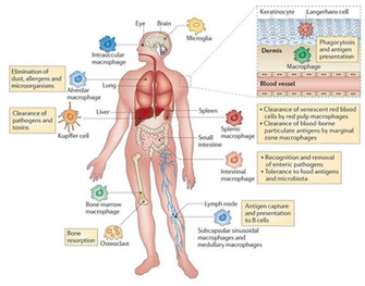 Kan Asthma afhjælpes naturligt?