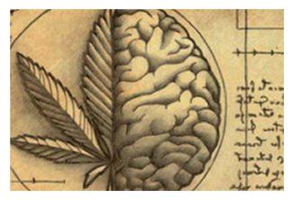 GcMAF har også virkning på Endocannabinoid Systemet