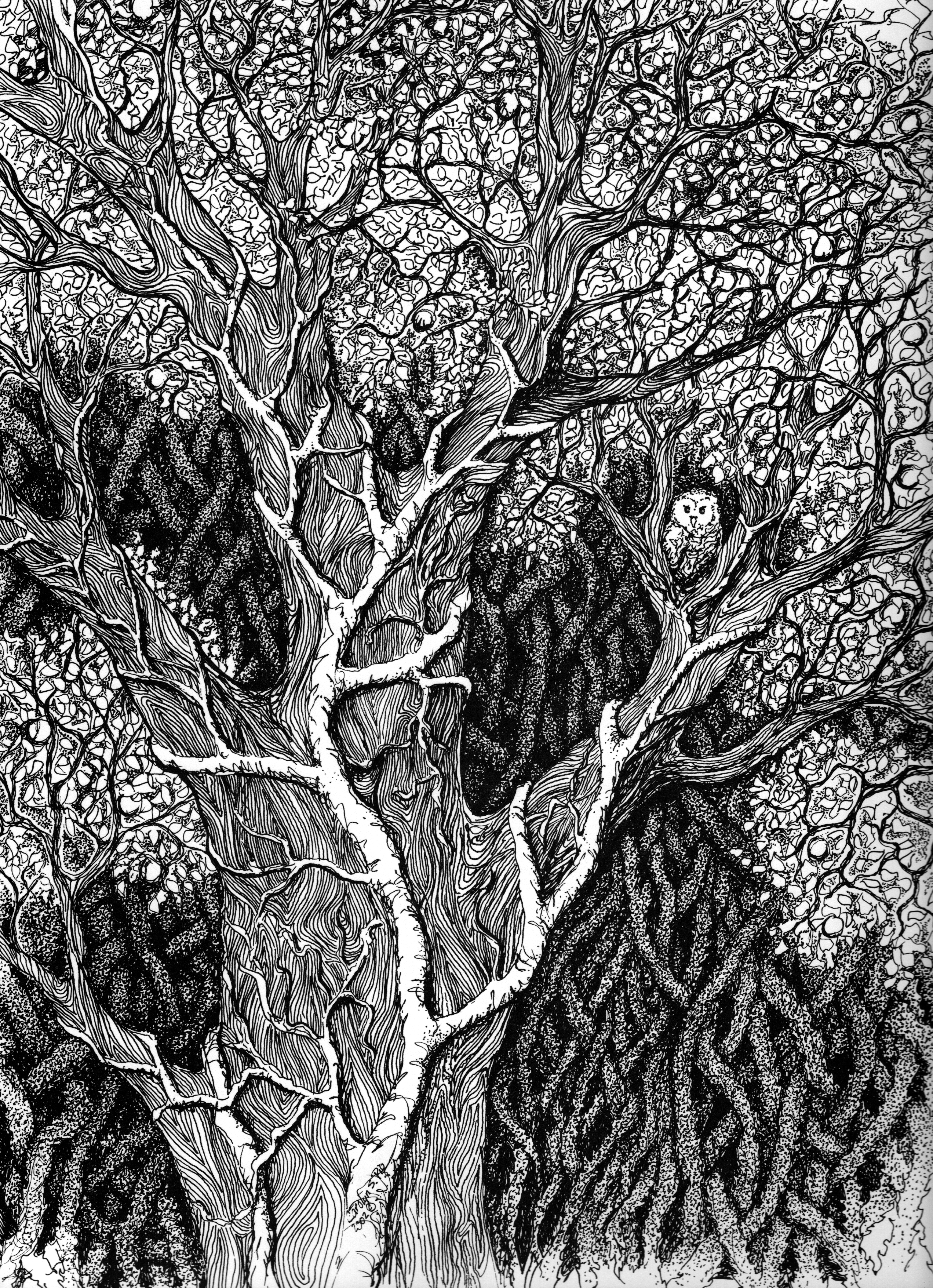 Tree wOwl