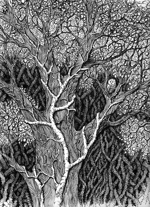 Owl in Tree ~ Print
