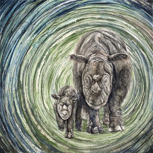 Sumatran Rhinos ~ Silver Lustre Print, 16 x 16