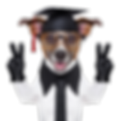 Funny Dog Wearing Graduation Cap