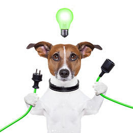 Dog With Light Bulb Overhead, Plugging In An Electrical Cord