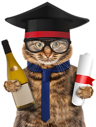 Funny Cat With Graduation Cap And Diploma
