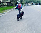 An afternoon stroll with Shadow!__#sa #s