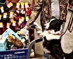 wrangler shopping.jpg