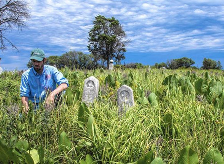 Pellsville and Loda Cemetery Prairies featured in Chicago Tribune Column and Video
