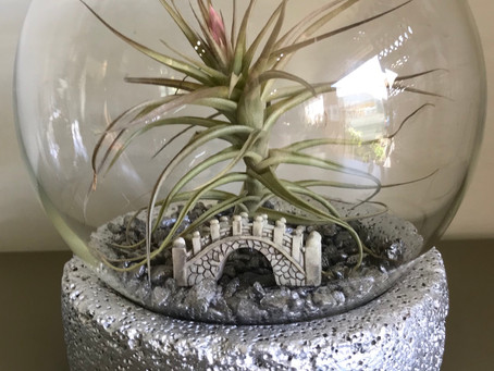 Air plant in a fish bowl vase