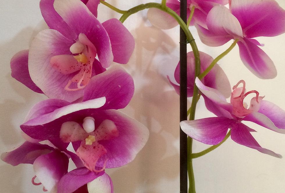 Single Orchid Arrangement