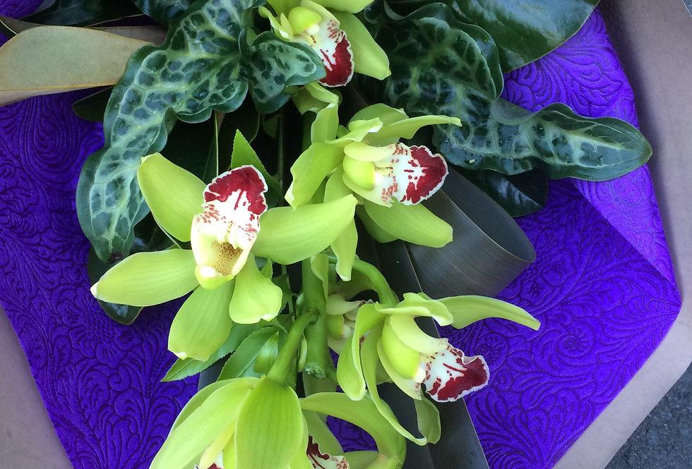 Single Orchid Spray