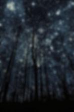 csillagfák.jpg