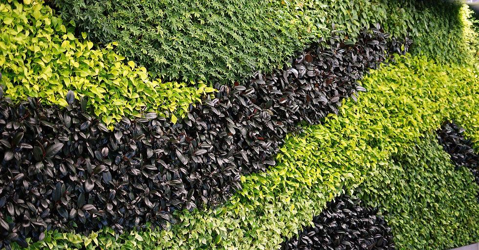 A living green planted wall (vertical garden)_edited.jpg