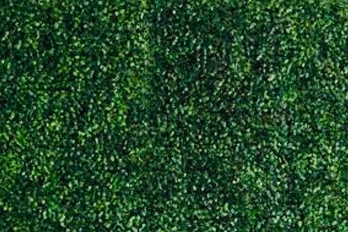 Backwood Hedge