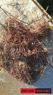 Tree roots removed from drain.jpeg