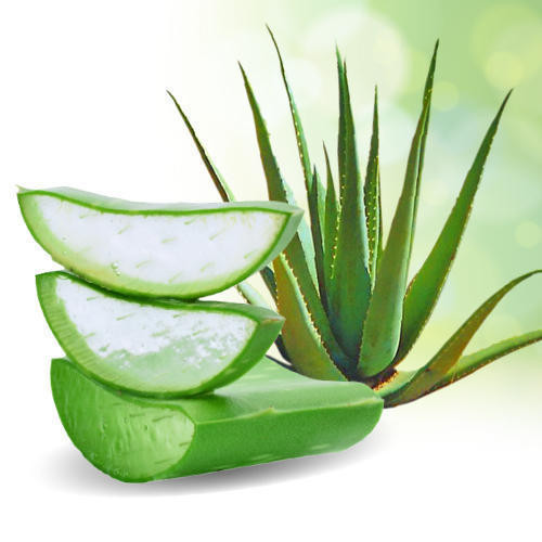 Aloe Vera has a natural fragrance